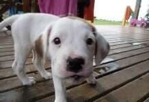 Hoteis Pet Friendly