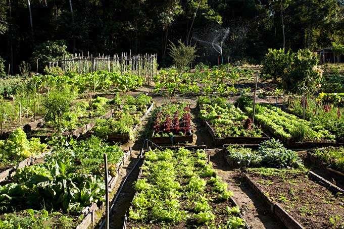 Horta Orgânica do Parador Lumiar - Foto Credito Rodrigo Azevedo