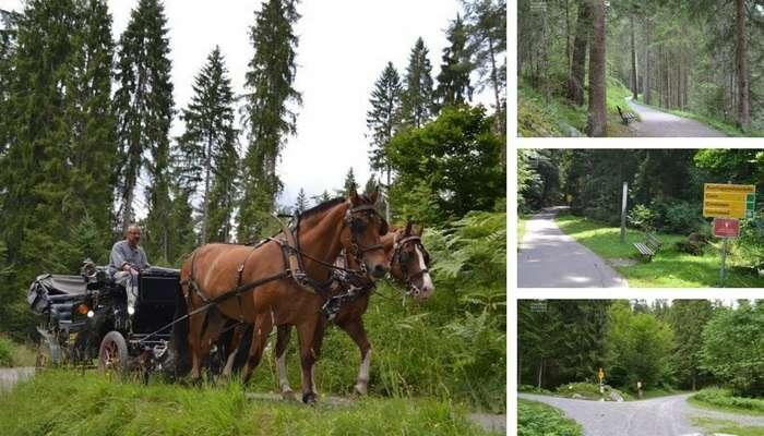 Passeios e Trilhas ao redor do Caumasee