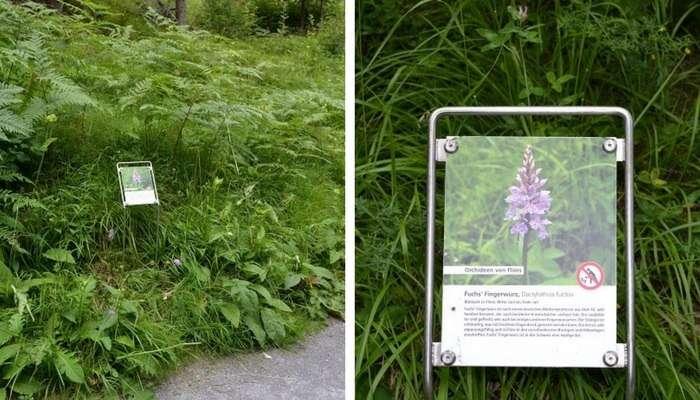 Plantas no Caumasee