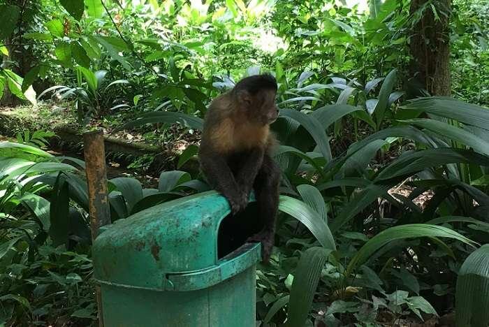 Animais no Parque Lage - Viagens Bacanas