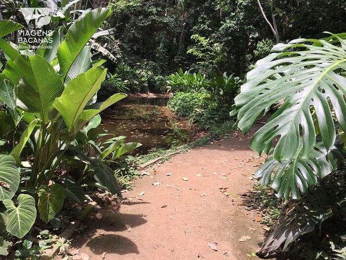 Natureza do Parque Lage - Viagens Bacanas