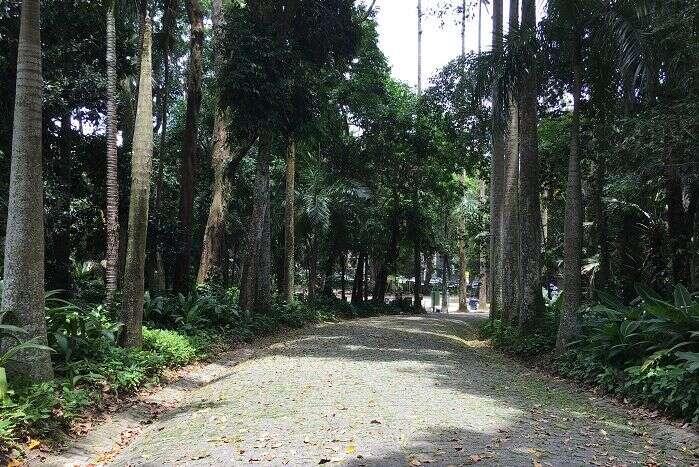 Alameda do palmeiras no Parque Lage - Viagens Bacanas