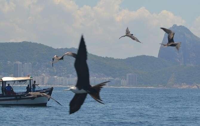 Aves nas Ilhas Cagarras - Viagens Bacanas