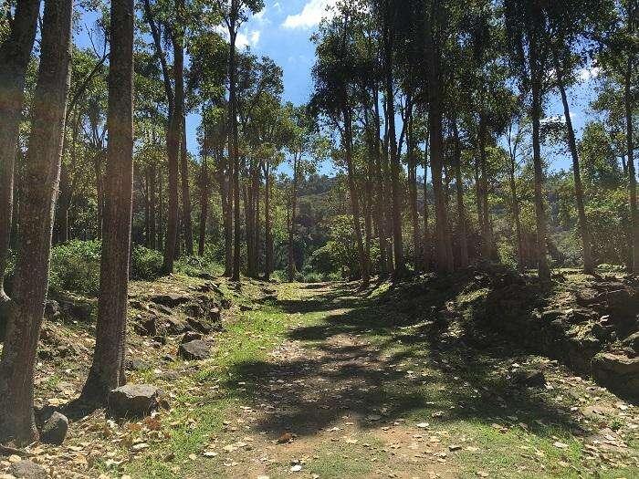 Natureza no Parque Arqueológico e Ambiental de São João Marcos