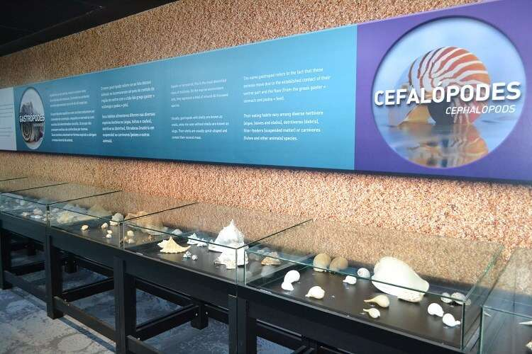 Exposição de conchas no AquaRio