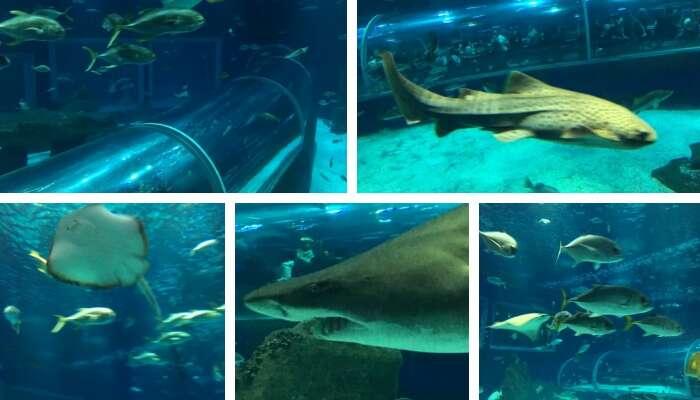 Recinto Oceânico do AquaRio - Viagens Bacanas