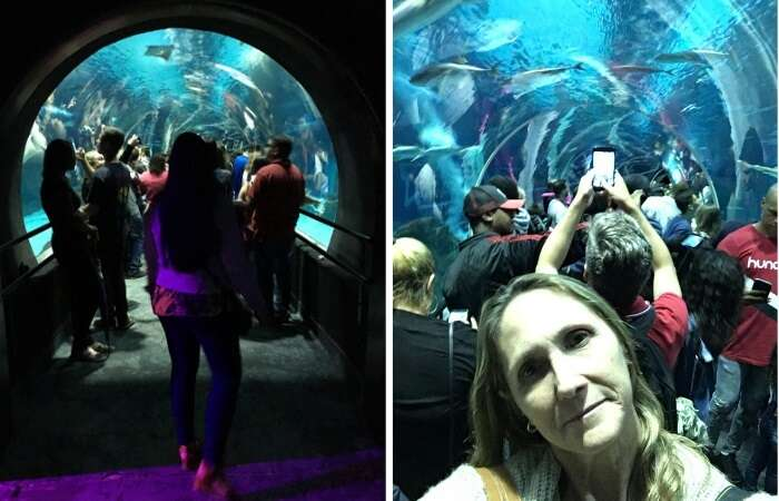 Túnel de vidro do Aquário Marinho do Rio de Janeiro