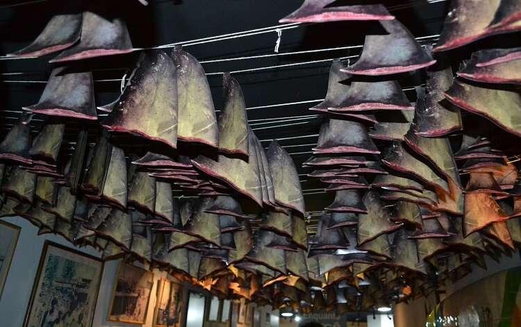 Barbatanas de tubarões no AquaRio