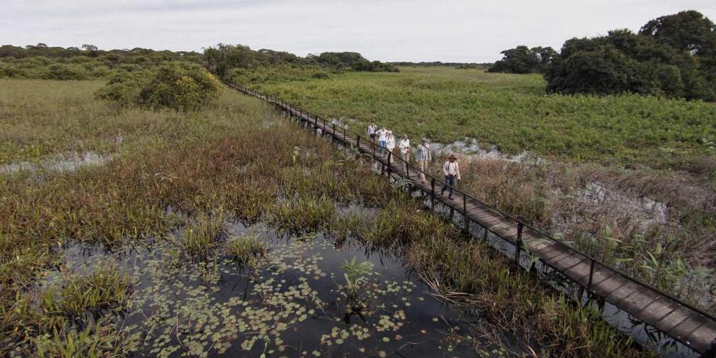 Pantanal - Viagens Bacanas