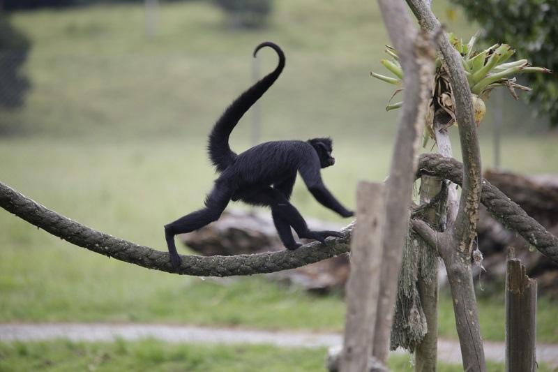 Portobello Resort Safari - animais