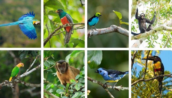 Animais e aves no Cristalino Lodge