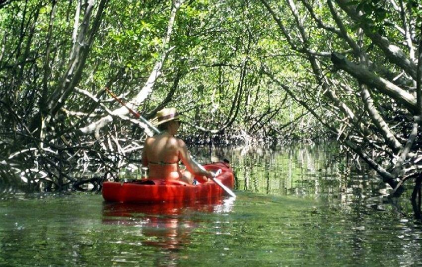 Caiaque no manguezal em Boipeba - Foto divulgação